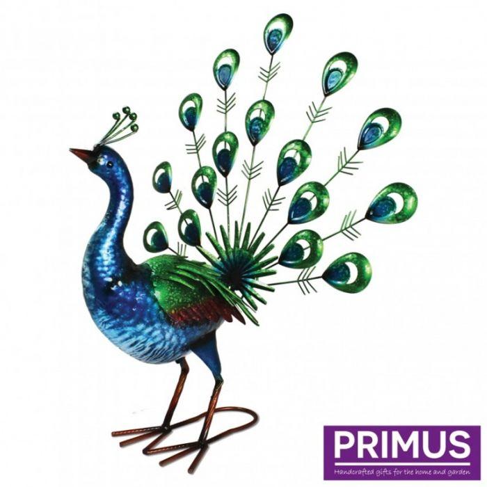 Primus Vibrant Fantail Peacock