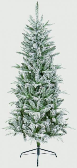 Slim Lapland Spruce