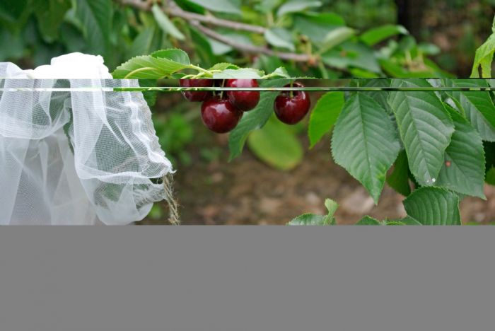 Agralan Fruit Tree Sleeves Pack 5