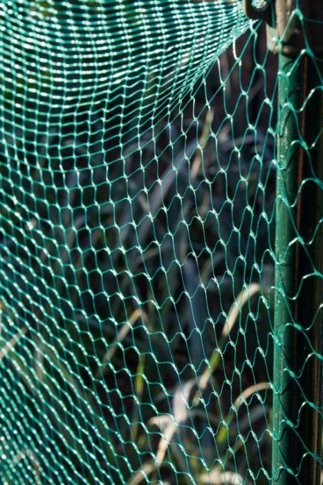 Ambassador Garden Net Green 15Mm X 3 X 2M