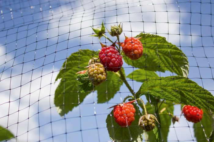Ambassador Fruit Cage Net 16 X 2M