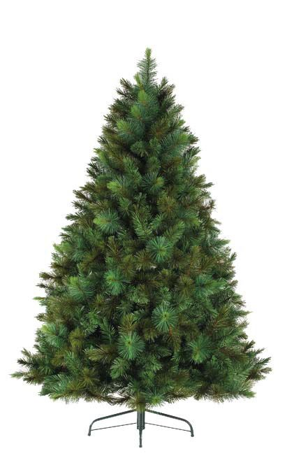 Vancouver Mixed Pine Tree