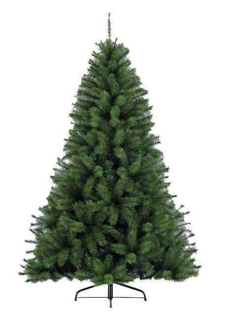 Canada Spruce Green Tree