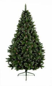 Rocky Mountain Pine