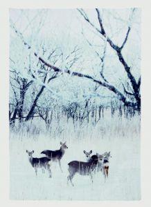 Deer In Snowy Meadow