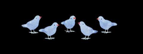 5 Piece Acrylic Birds