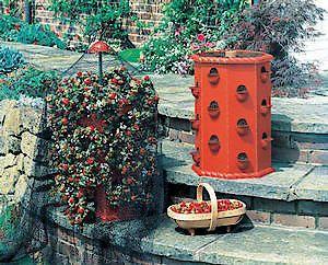 Strawberry Tub 60Cm X 43Cm (2' X 17)