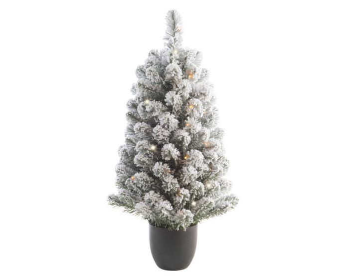 Snowy Imperial Pot Tree
