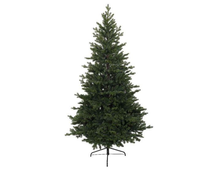 Green Oxford Pine Tree