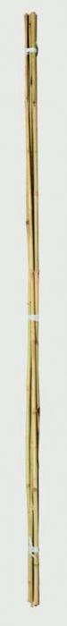 Ambassador Bamboo Canes 2' Pack Of 20