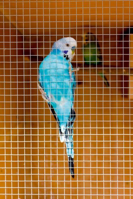 Ambassador Cage & Aviary Welded Panel 0.6x0.9m